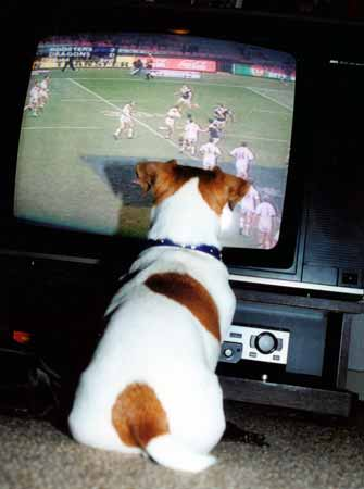 Image Result For Getting Your Dog