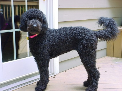 Image Result For Can Dogs Hurt