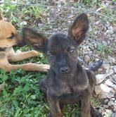 mail.google.com3 1 Fighting Animal Cruelty in Panama