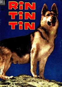 Rin Tin Tin 212x300 Watching a Breed of Dog Implode